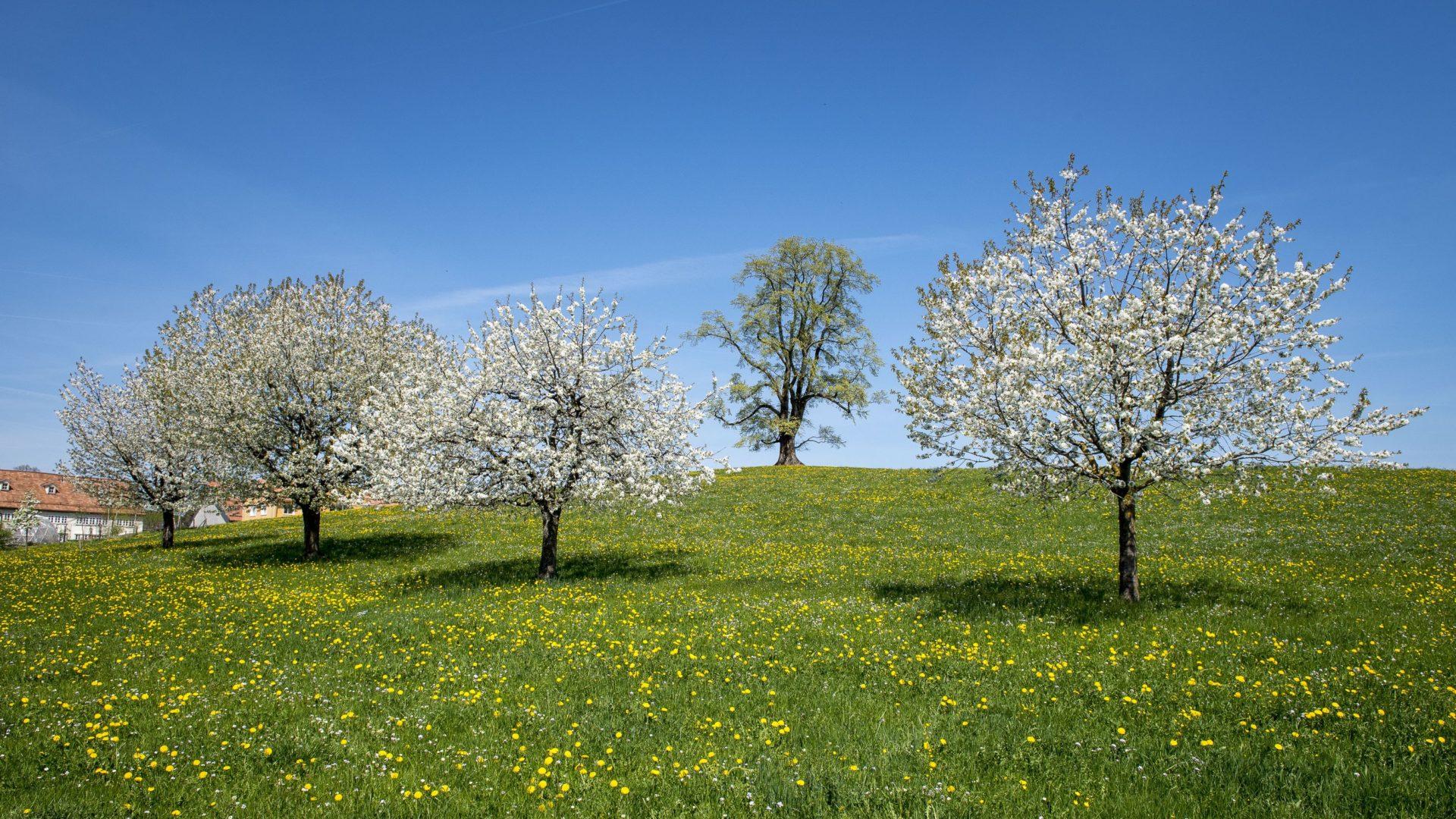 Bioring Appenzellerland